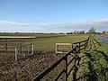 Horse paddocks - geograph.org.uk - 1670336.jpg
