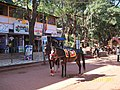 Horses in Matheran - panoramio.jpg