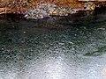 Ice on the Eno RIver Hillsborough NC6116 (25985979328).jpg