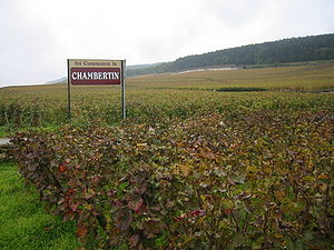 Ici commence le Chambertin.JPG