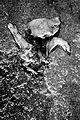 Igualdad Animal - Investigación Granjas Cerdos Toledo - 15-06-2010 - 50 (6992303176).jpg