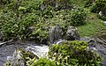 Ilha das Flores P5260059 (35199716193).jpg