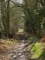 In Kilsture Forest - geograph.org.uk - 736337.jpg