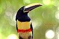 In Nature A caçada atrais dele..deu trabalho mas valeu a pena - Flickr - marcodede.jpg