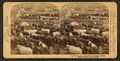 In the Great Union Stock Yards (stockyards), Chicago, U.S.A, from Robert N. Dennis collection of stereoscopic views.png