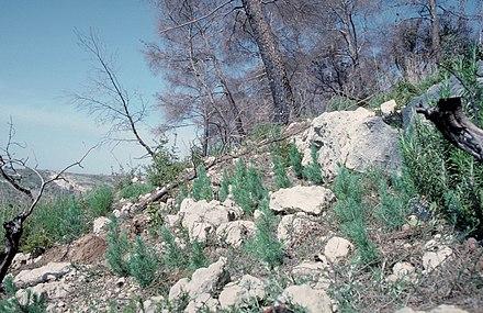 Résilience (écologie) - Wikiwand