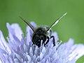 Insekt (9031576476).jpg