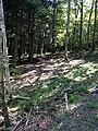 Into the grove - panoramio.jpg