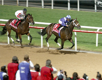 Invasor (horse) - Image: Invasor 2007