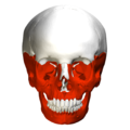 Irregular bones in skull - anterior view.png