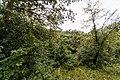 Izvoare – Risipeni, monument al naturii img 030.jpg