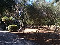 Japan Lane, Japanese Garden, and whereabouts 20.jpg