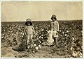 Jewel and Harold Walker, 6 and 5 years old, pick 20 to 25 pounds of cotton a day - Location- Comanche County - Oklahoma LOC 7985824248.jpg