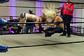 Jillian Hall performing a sit-out facebuster.jpg