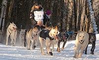 Justin Savidis dogs turning the corner (8529502681).jpg