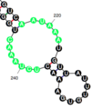 KHDRBS3 binding sites.png