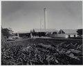 KITLV - 16606 - Kurkdjian - Sugar factory De Maas at Besuki, East Java - circa 1910.tif