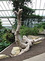 Kew Gardens - London - September 2008 (2955681724).jpg