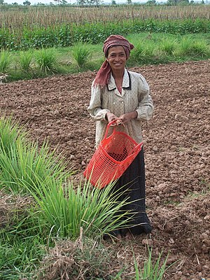 Peopling of Thailand - Khmer woman working in field