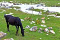 Kirgisistan (28094220976).jpg