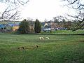Kirkharle Farm - geograph.org.uk - 675248.jpg
