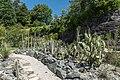 Klagenfurt Villacher Vorstadt Botanischer Garten Sukkulente der Neuen Welt 21062016 2812.jpg