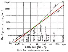relationship between basal metabolic rate and body size comparison