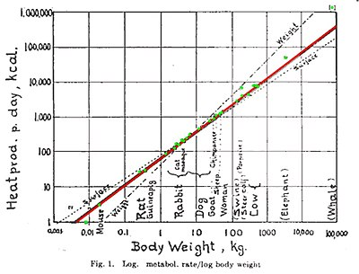 relationship between metabolic rate and body size chart
