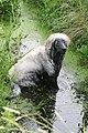 Kleszczele Summer 2008 not-so-golden retriever's world - panoramio.jpg