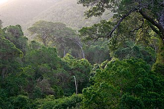 Southern Afrotemperate Forest - Southern Cape Afrotemperate forest near Knysna