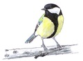Koolmees Parus major Jos Zwarts 13.tif