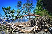 Kopachuck State Park beach, 01.jpg