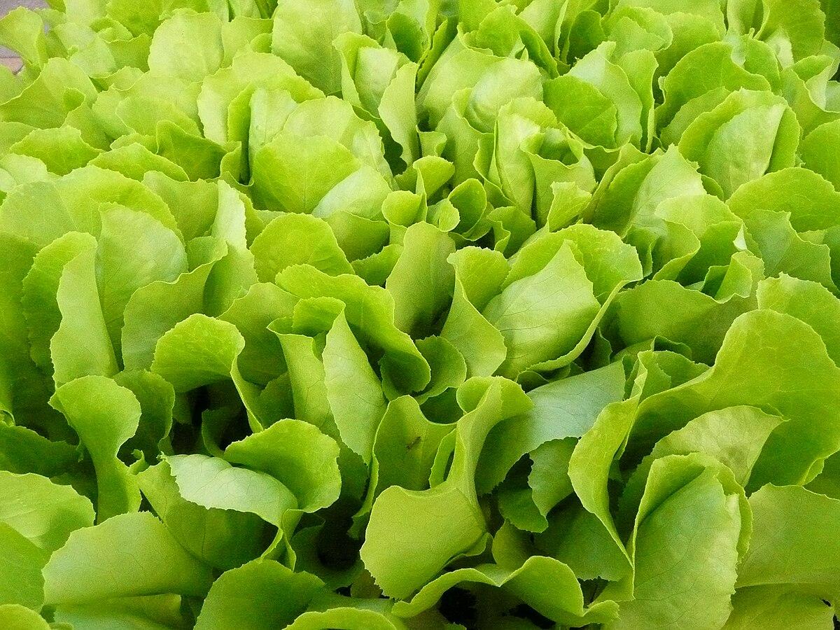 Салатный цвет и салатовый