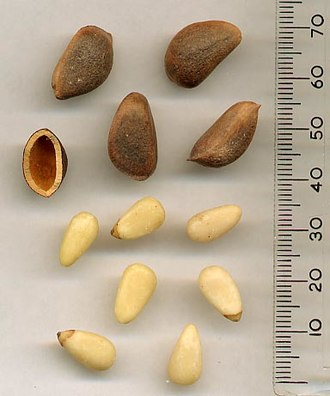Nut (fruit) - Korean Pine seeds in shell and empty shell, above; removed from shell, below