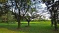 Kranji Way - panoramio (1).jpg