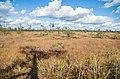 Krievu purvs - panoramio.jpg