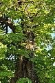 Kurivtsi-Lypa-Franka-15058369.jpg