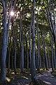 L 54a Kühlung - Gespensterwald bei Nienhagen (10).jpg