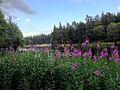 Lac de la Chaîse-Dieu (Parc naturel régional du Livradois-Forez).jpg