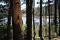 Lac des Pises - Paysage (03).jpg