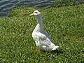 Lakeland Lake Mirror Promenade bird01.jpg