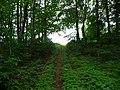 Landschaftsschutzgebiet Horstmanns Holz Melle -Im Wald- Datei 3.jpg