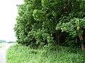 Landschaftsschutzgebiet Pferdebruch Eickholt Melle -Waldanfang- Datei 2.jpg