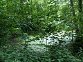 Landschaftsschutzgebiet Warmenau-Ufer LSG OS 00019 Datei 35.jpg