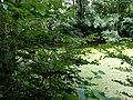 Landschaftsschutzgebiet Warmenau-Ufer LSG OS 00019 Datei 39.jpg