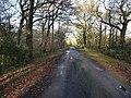 Lane from Elsted Marsh to Treyford - geograph.org.uk - 1722058.jpg