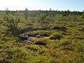 Lapland - Urho Kekkonen National Park - 20180728171854.jpg