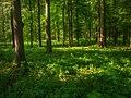 Las w parku.jpg