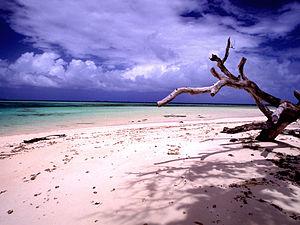Laura beach n tree (170671778)