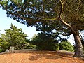 Le parc du chateau du nessay - panoramio (1).jpg
